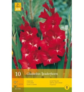 10 Glaïeuls Traderhorn Cal. 12/14