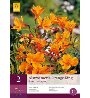 2 Lis des Incas (Alstroemeria aurea Orange King)