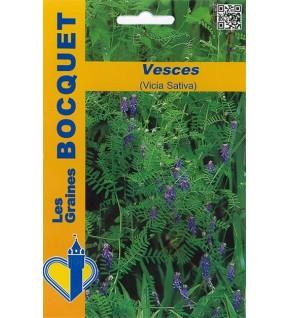 Vesces (Vicia sativa) pour 10m²