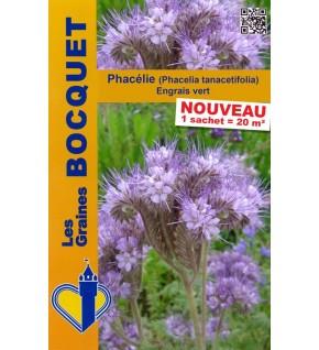 Phacélie ( Phacelia tanacetifolia )