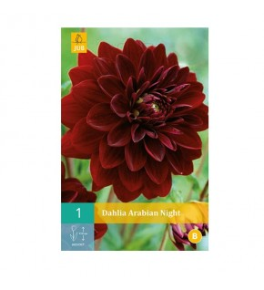 1 Dahlia décoratif Arabian...
