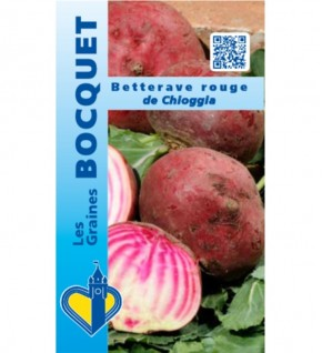 Betterave rouge Chioggia