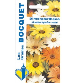 Dimorphothéca Hyb varié