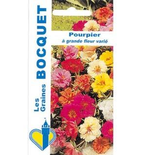 Pourpier fleuri à fleur double varié