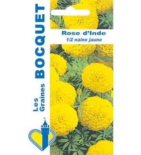 Rose d'Inde demi naine jaune