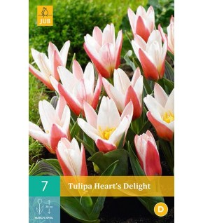 Tulipes Hearts Deligt