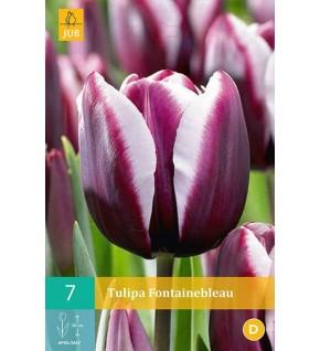 7 Tulipes Fontainebleau