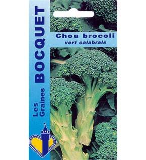 Chou brocoli Calabrais à jets verts ( Groene Calabrese )