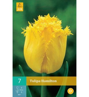 7 Tulipes Hamilton