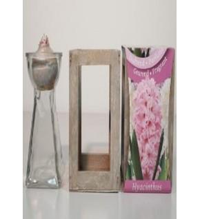 Jacinthe avec verre et lanterne en bois ROSE