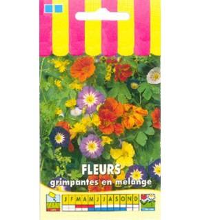 Fleurs grimpantes en mélange