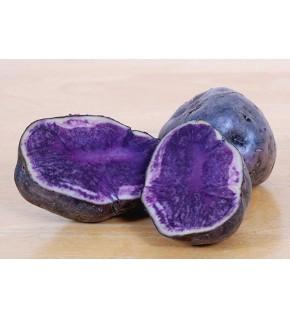 Pomme de terre Bleue d'Artois