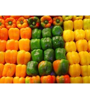 Poivron Quadrato d'asti Giallo ( poivron gros carré doux )