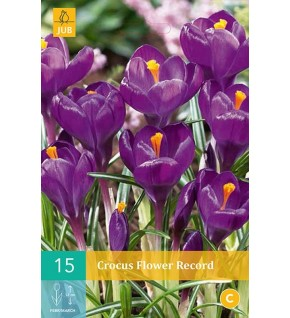 15 Crocus Flower Record calibre 8/9