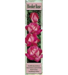 1 Rosier buisson Bicolor Rose et blanc