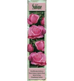 1 Rosier buisson Sabine rose
