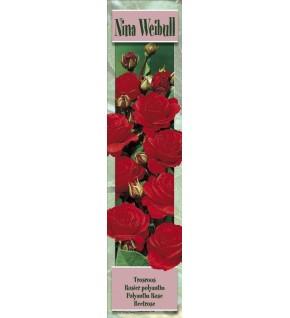 1 Rosier à massifs Nina Weibull rouge vif
