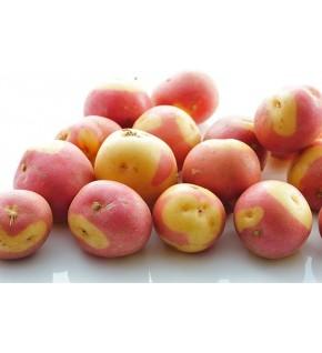 Pomme de terre Oeil de Perdrix