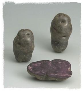 Pomme de terre Vitelotte à peau violette