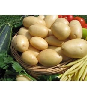 Pomme de terre Nicola certifiés ECOCERT FR-BIO-01