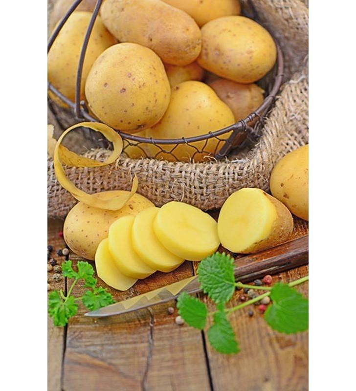 Pomme de terre Blanche