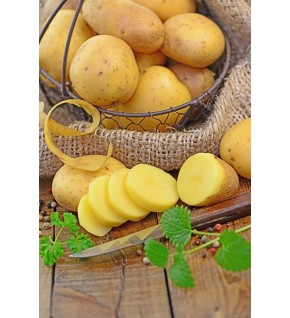 Pomme de terre Blanche - BIO certifiés ECOCERT FR-BIO-01