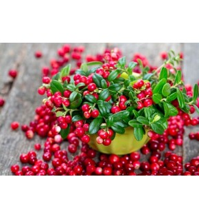 1 Cranberry (Myrtille rouge)