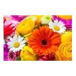 Graines et bulbes de fleurs : capucine, œillet,  jacinthe ... | Graines Bocquet