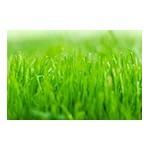 Graines et semences pour gazon | Graines Bocquet