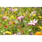 Graines de fleurs en mélange à semer | Graines Bocquet