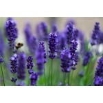 Graines de fleurs parfumées à semer | Graines Bocquet