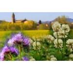 Engrais verts pour jardin et potager   Graines Bocquet