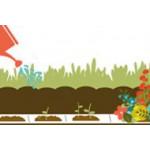 Ruban/Tapis de graines de fleurs/légumes   Graines Bocquet