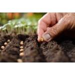 Les légumes à semer au mois de mars | Graines Bocquet