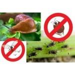Insecticides et répulsifs pour jardin et potager   Graines Bocquet