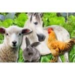 Graines fourragères pour vaches, moutons, lapins | Graines Bocquet