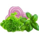Plantes aromatiques et plantes médicinales | Graines Bocquet