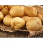 Filets de 25 Plants de Pommes de Terre Tardives | Graines Bocquet