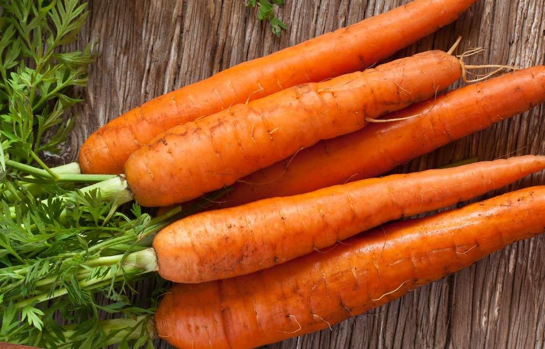 Que Planter En Octobre Sous Serre la culture des carottes | conseils graines bocquet